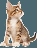 little kitteh